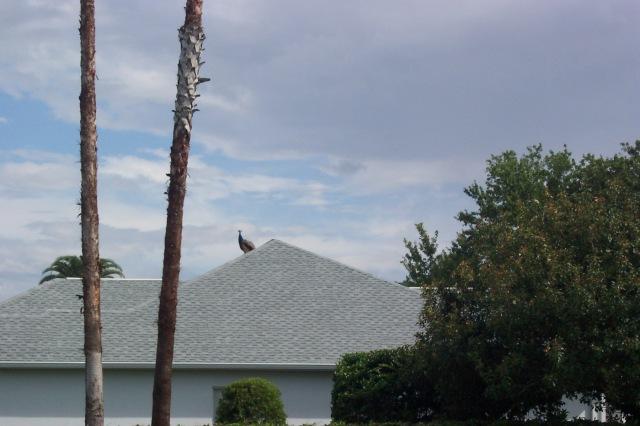 7-16-12 crane on roof 001