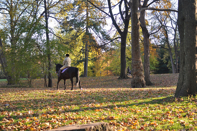horse prospect park